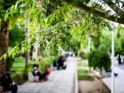 Isfahan-47